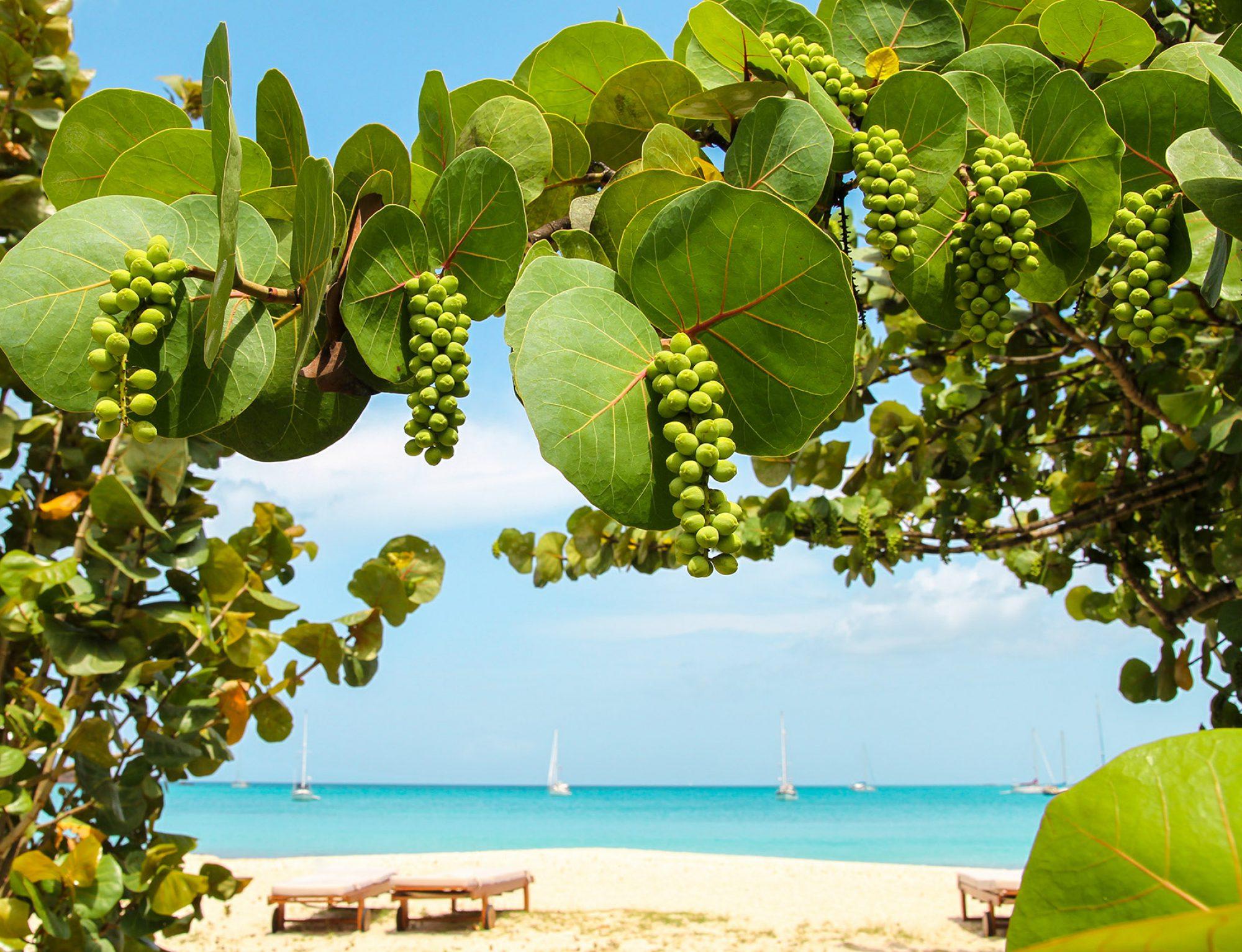 Caribbean Hot Property